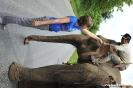 Muang Khua- Elephant